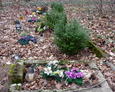 Sztuczne kwiaty to znak, że od czasu do czasu ludzie odwiedzają teren cmentarza
