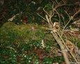 Pozostałości mogiły na cmentarzu w Stęknicy