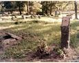 Damnica - cmentarz komunalny (postument w kształcie pnia drzewa bez tablicy inskrypcyjnej)