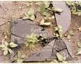 Damnica - cmentarz komunalny (rozbita i częściowo poskładana tablica inskrypcyjna)