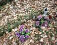 Widoczna kamienne rama wyznaczająca mogiłę ze sztucznymi kwiatami