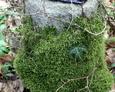 Kawałek tablicy inkrypcyjnej na postumencie w ksztacłcie pnia drzewa