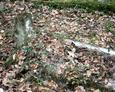 Zdewastowane mogiły w części dziecięcej cmentarza