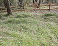 Nierówny teren cmentarza wskazuje na istnienie niegdyś większej liczby nagrobków