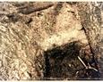 Fragment grobowca na terenie starego kirkutu w Lęborku