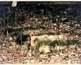 Dąbrówka Wielka