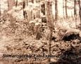 Zdewastowany teren cmentarza ewangelickiego w Lesiakach