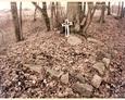 Cmentarz w Dziechlinie