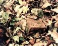 Huta szkła Leśnice