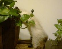 interested i gardening