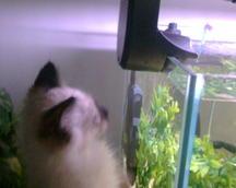 and fish.