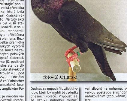 Svet holubu - stawak polski