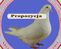 Logo Klubu białki polskiej - propozycja