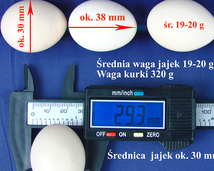 egg / size / weight