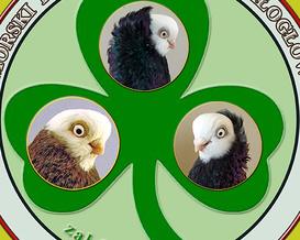 Klub białogłówek- logo propozycja