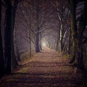 Goczałkowice - Pod lasem