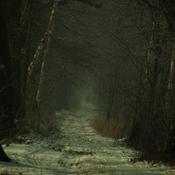 Goczałkowice-Zdrój  -  Pod lasem