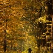 Goczałkowice - Zdrój  -  Las