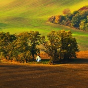 Morawy  -  Pola