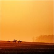 Po drodze  -  na polach...