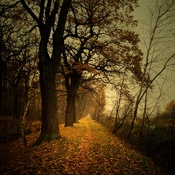 Pod lasem  -  Goczałkowice-Zdrój