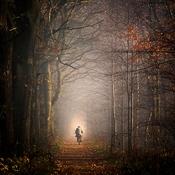 Las  -  Goczałkowice-Zdrój