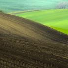 Morawskie pola