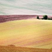 Morawskie Pola-2012