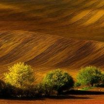 Morawy - pola...