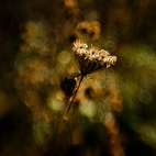 Lensbaby  -  Composer