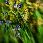 Lensbaby  Composer...