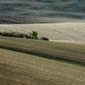 Morawy