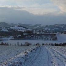 Gaboń zimą