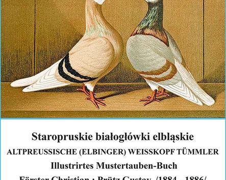 Białogłówki elbląskie