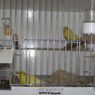 Para lęgowa 2012 r