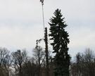 Wycinka drzew w Domanicach