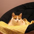 Koty w hotelu mają dużą swobodę :)