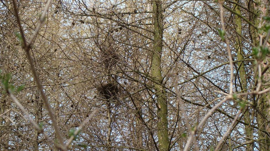piętrowe  gniazdo