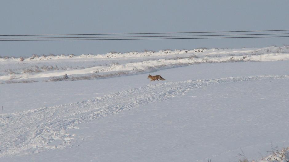 Spotkanie z lisem