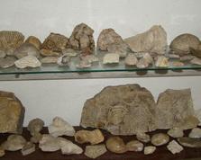 Skamieniałości z obszaru Kaliny Małej