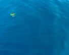 Meduza w locie
