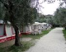 Camping Weekend - oliwny gaj