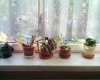 Szkolne okazy roślin, zebrane przez uczniów