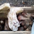Marek uzbierał cały kosz grzybów!