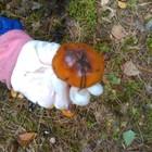 A ten grzyb jest jadalny?