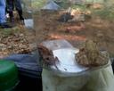Wszystkie płazy są pod ochroną, wiec pod koniec wycieczki, wypuściliśmy żaby na wolność