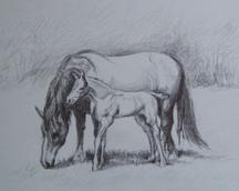 Konie - rysunek, 21x30