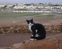 Rabat - Medyna