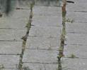 Kostka kamienna, zarośnięta trawą i mchem, pokryta nalotem mikrobiologicznym
