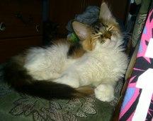 Bonnie (28.12.2014)